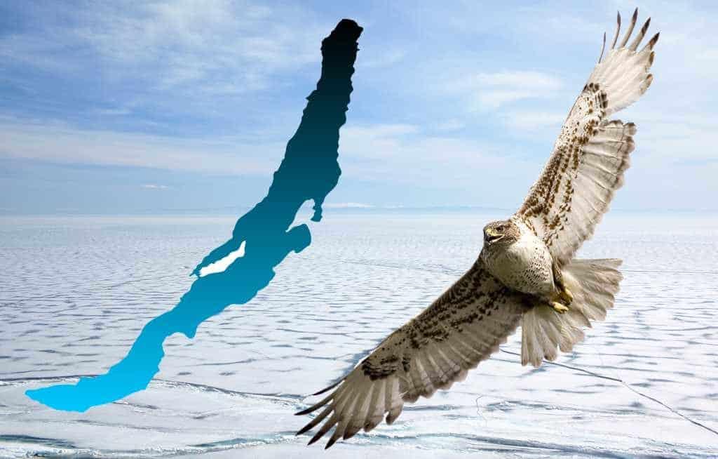крыло ястреба над Байкалом